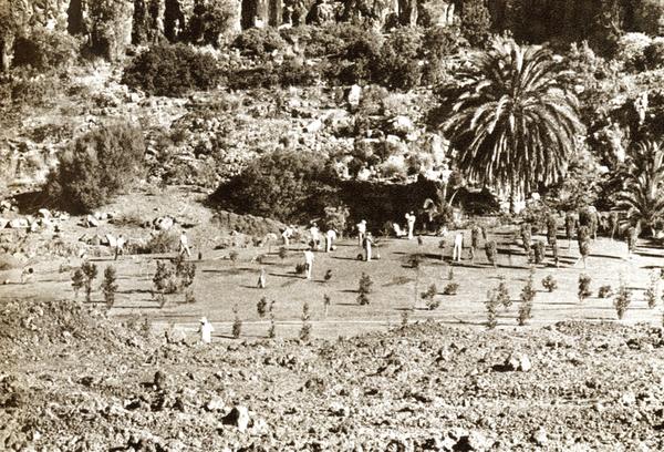El Jardín - Plantación de laurisilva, 1964 -