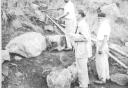 Sventenius 1955 -
